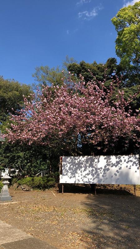 s-高倉諏訪神社 (1)